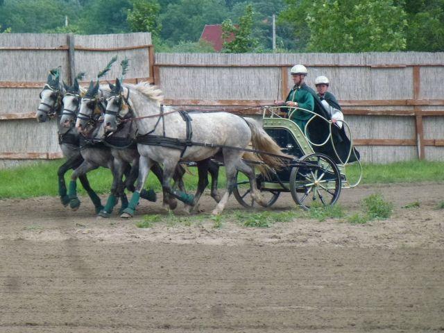 budapest-horsefarm26