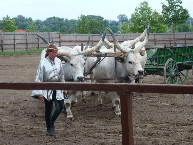 budapest-horsefarm27