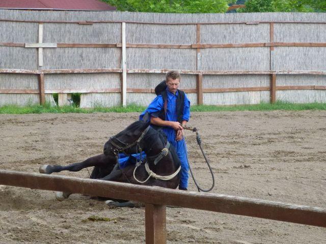 budapest-horsefarm29
