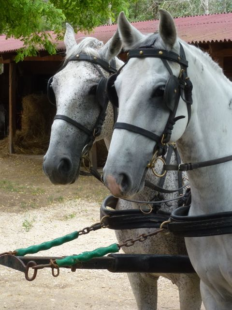 budapest-horsefarm38