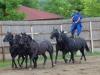 budapest-horsefarm32