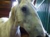 budapest-horsefarm35