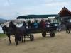 budapest-horsefarm39